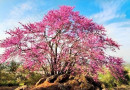 'HANAMI' villarrense en la primavera cultural japonesa